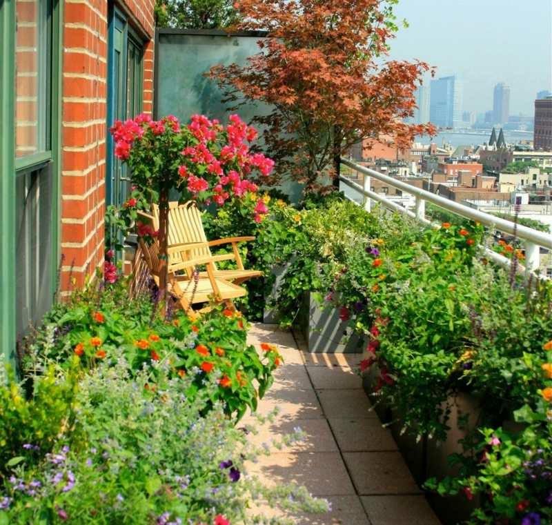 5 beispiele f r winterharte balkonpflanzen On winterharte balkonpflanzen