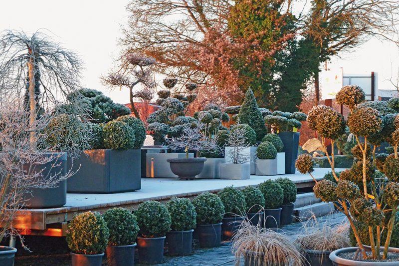 Terrassenbepflanzung winterhart