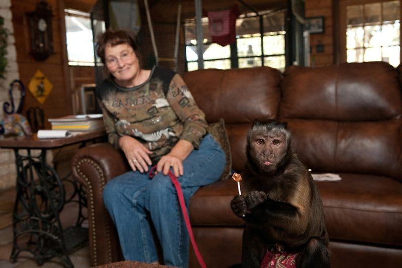 Affen als Haustier