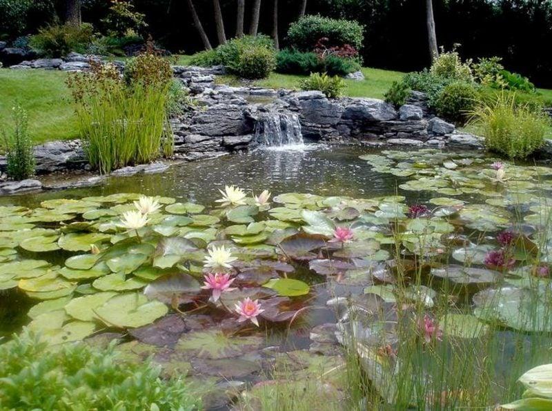 Bachlauf und dekorativer Gartenteich mit Wasserlilien