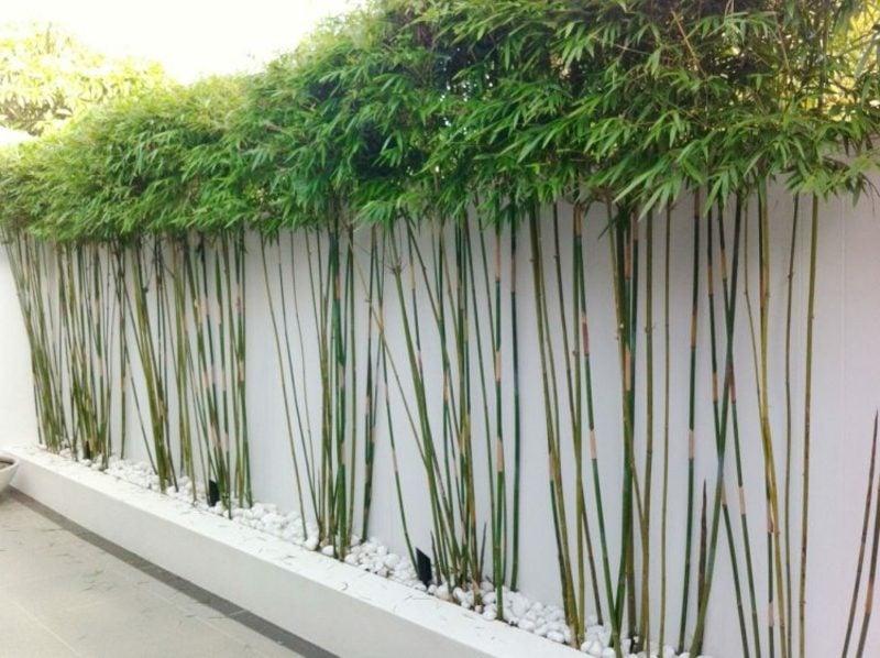 Sichtschutzzaun Bambuspflanzen Feng Shui Garten