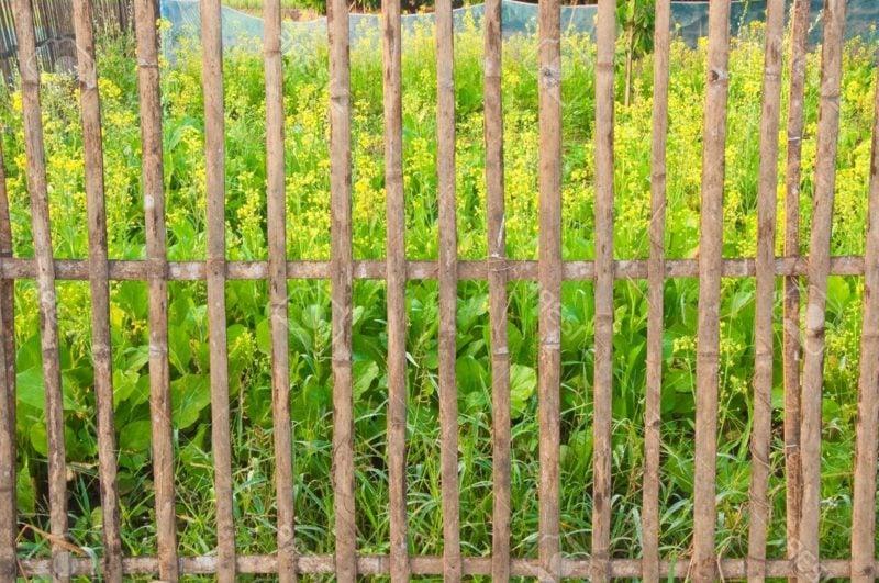 Gitterzaun Bambus