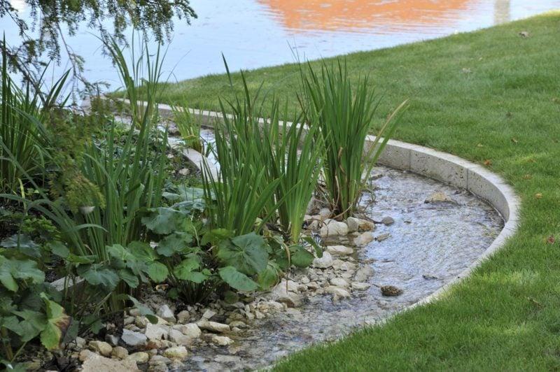 Bachlauf und Wasserpflanzen
