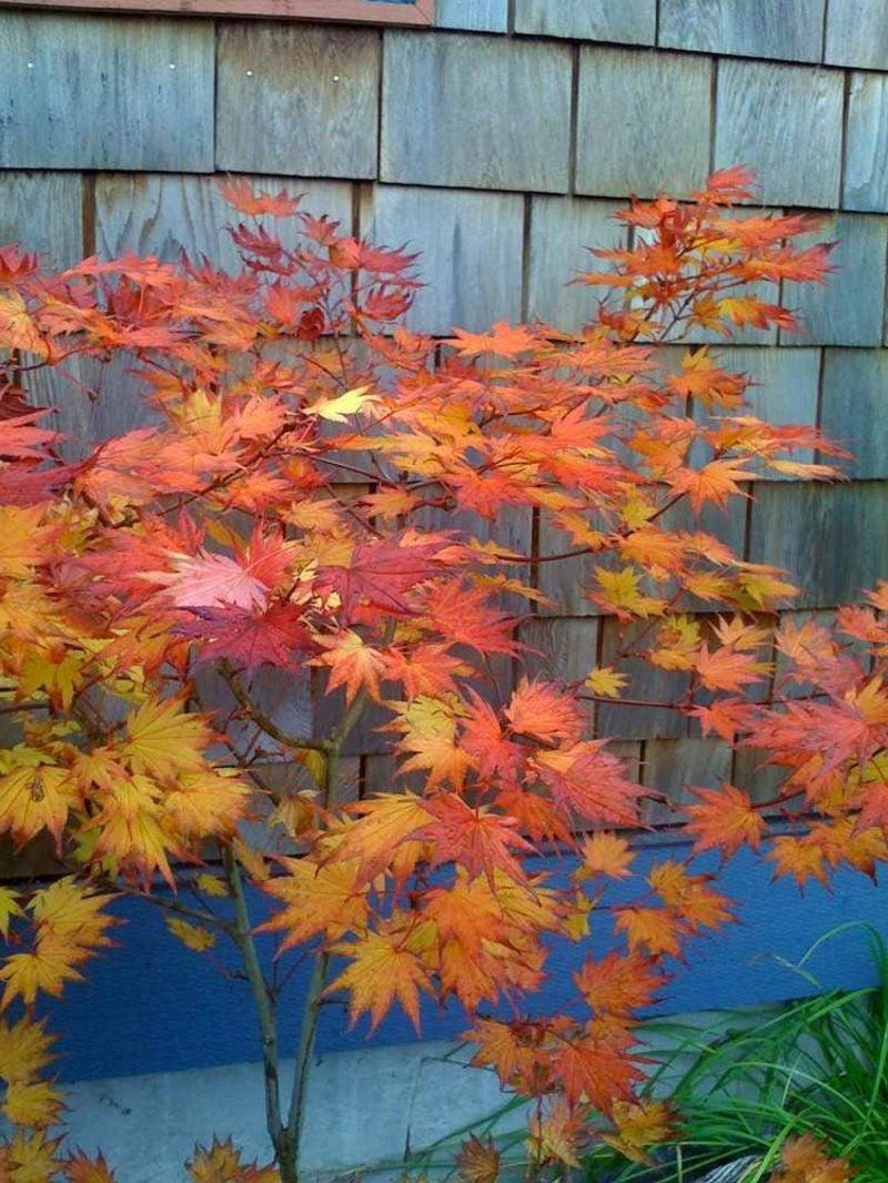 Feng Shui Garten Pflanzen