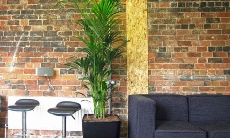 Kentia-Palme-Informal_Meeting_and_Breakout_area_with_a_bushy_Kentia_Palm_display_web1