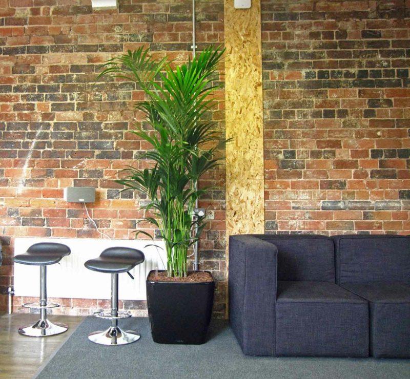 Kentia Palme Informal Meeting area bushy