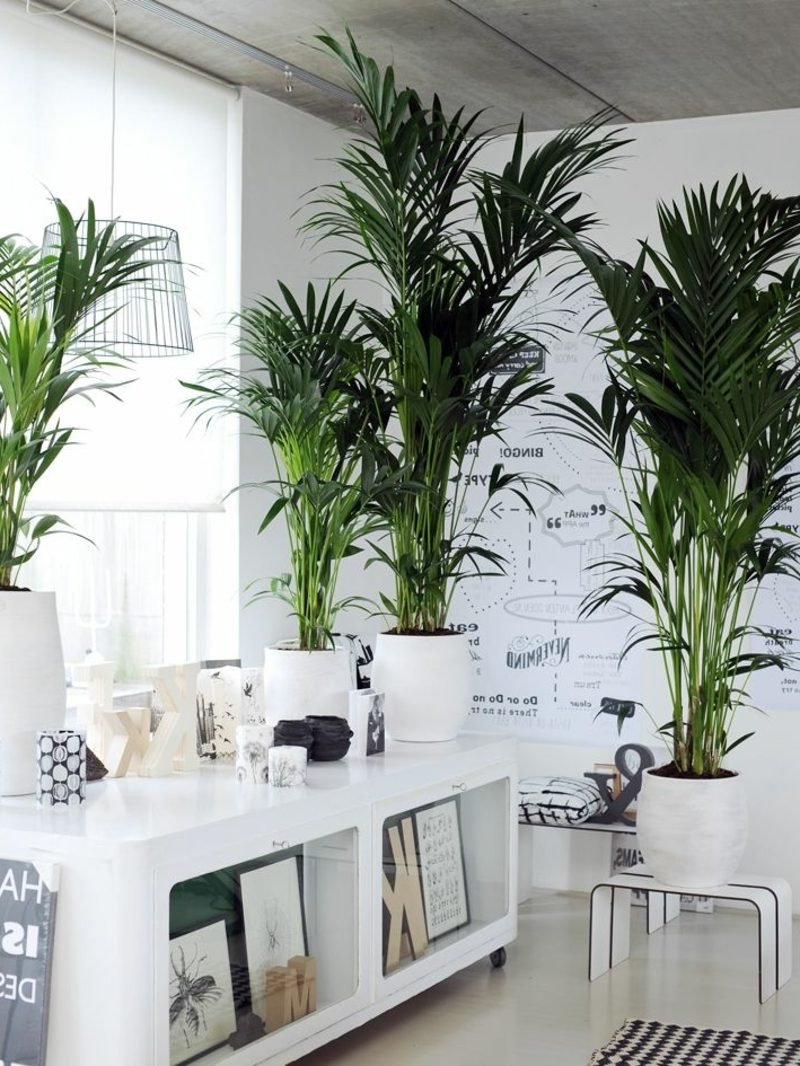 Kentia Palme green interiors