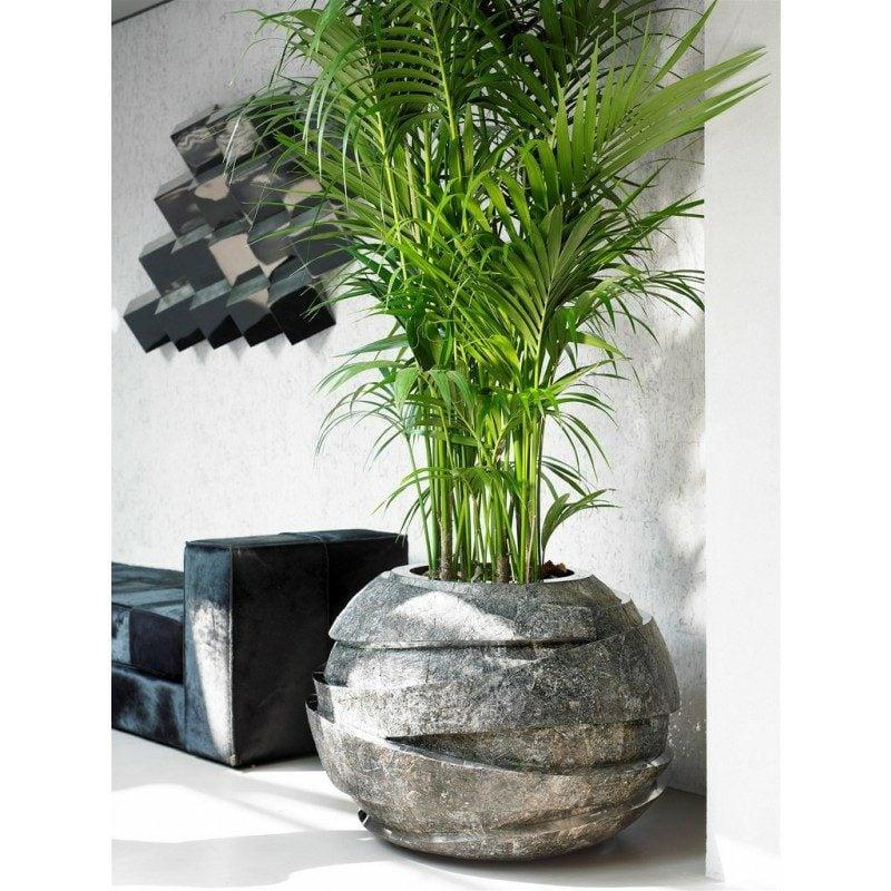 kentia palme balkon garten gartenarbeit haus garten. Black Bedroom Furniture Sets. Home Design Ideas