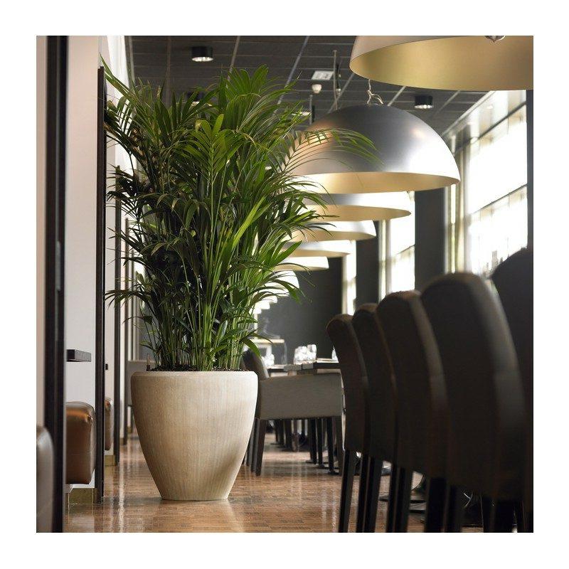 palme wohnzimmer: wohnzimmer palme pflege raum und m beldesign, Hause deko