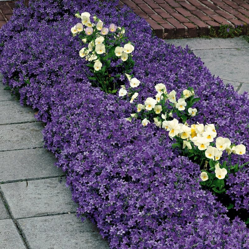 Gartengestaltung Blumenbeet Polsterstauden