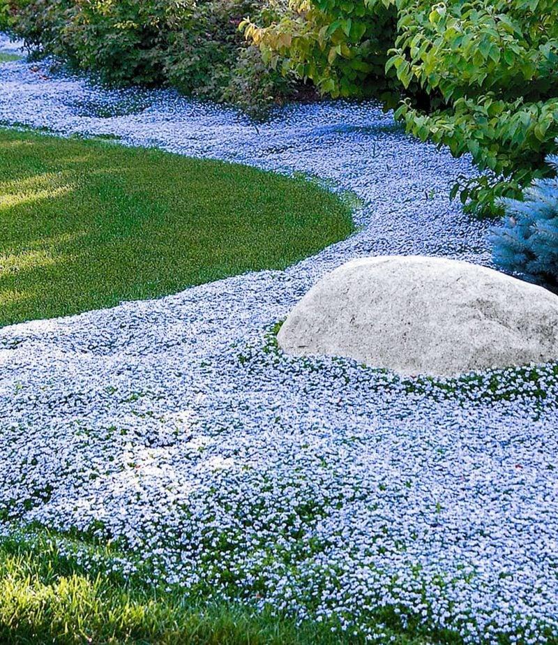 kreative Gartengestaltung Polsterstauden Hellblau