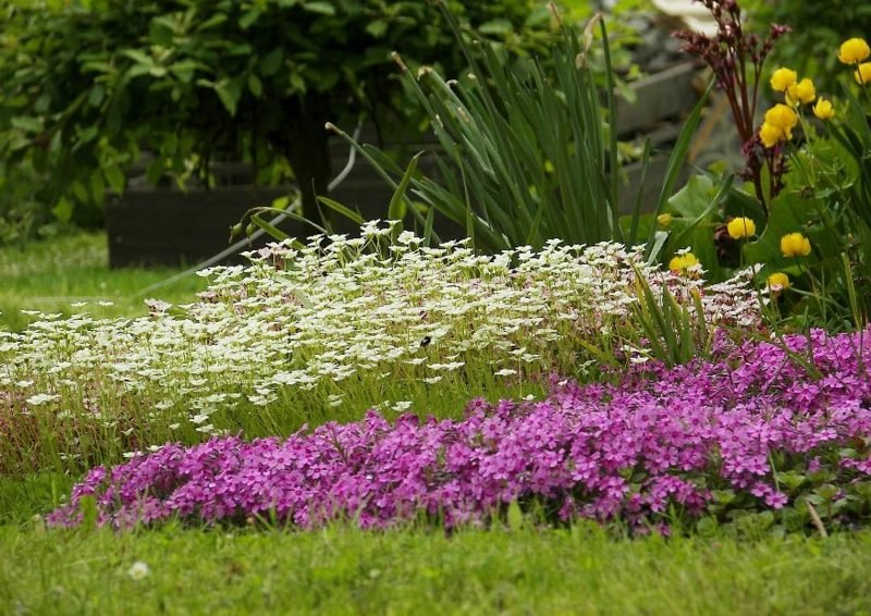 Posterstauden originelle Gartengestaltung