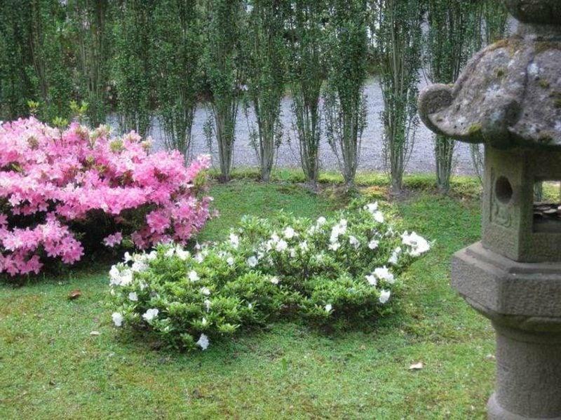 Feng Shui Garten Rhododendron