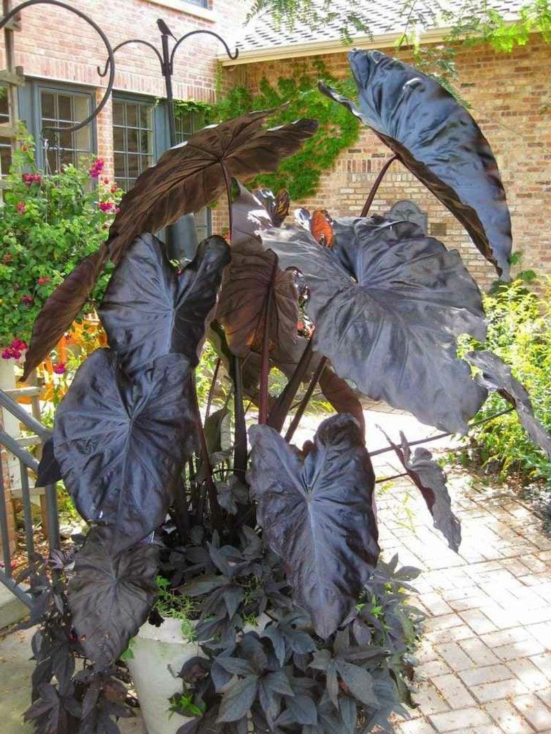 Pflanzenarten Gartengestaltung nach Feng Shui