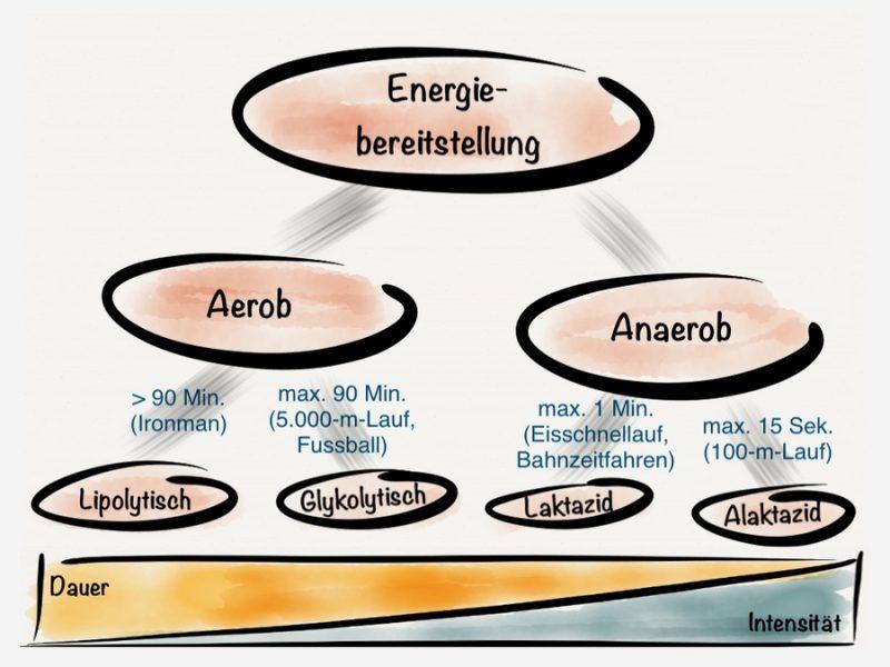 aerobes training vorteile