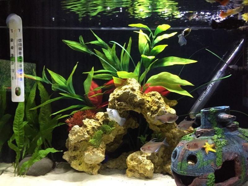 Aquarium Einrichtungsbeispiele Deko Idee