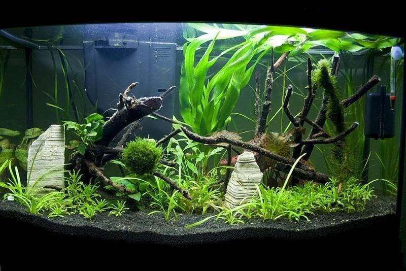 Aquarium Einrichtungsbeispiele Art