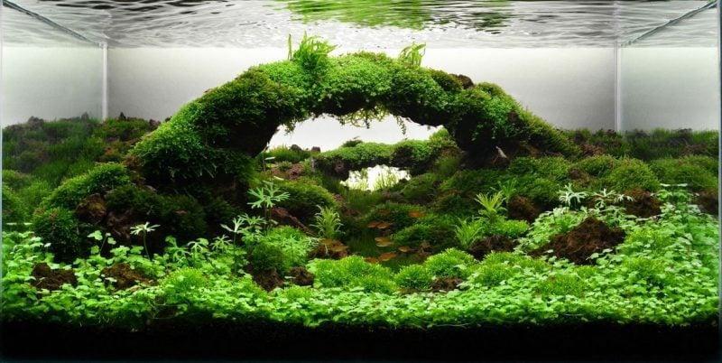 Aquarium Einrichtungsbeispiele Art Design