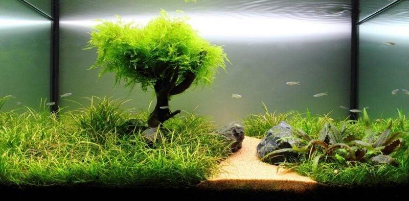 Aquarium Einrichtungsbeispiele mit Baum