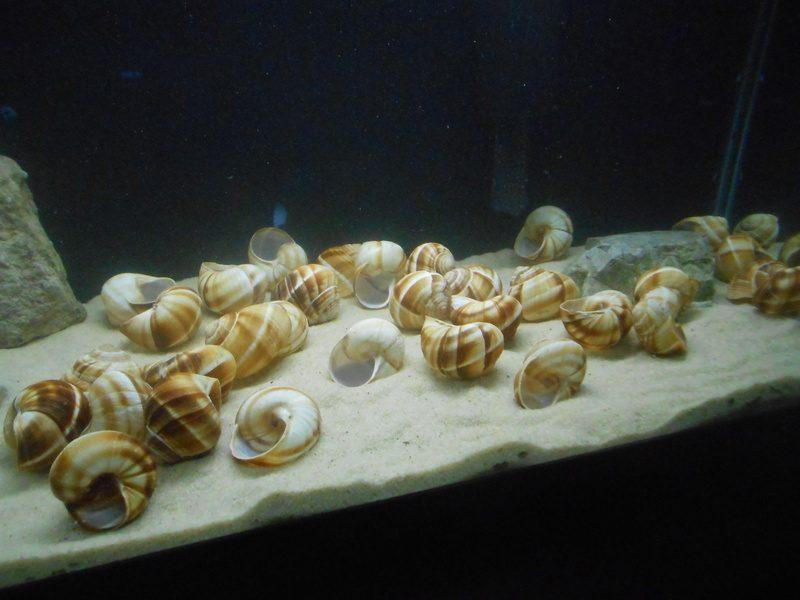 Aquarium Einrichtungsbeispiele Boden