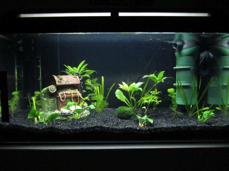 Aquarium Einrichtungsbeispiele Deko