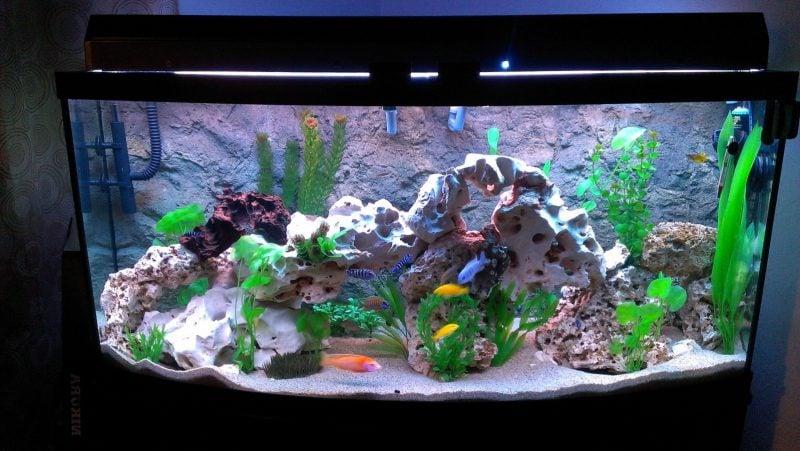 39 faszinierende aquarium einrichtungsbeispiele und tipps deko feiern zenideen. Black Bedroom Furniture Sets. Home Design Ideas