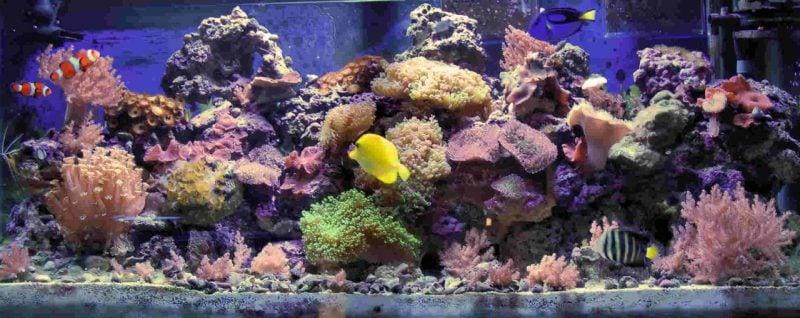 Aquarium Einrichtungsbeispiele Farben