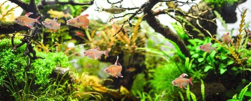 Aquarium Einrichtungsbeispiele Fische