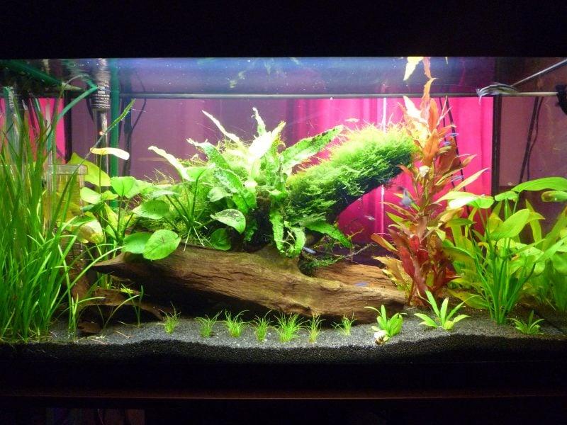 aquarium-einrichtungsbeispiele-gestaltung