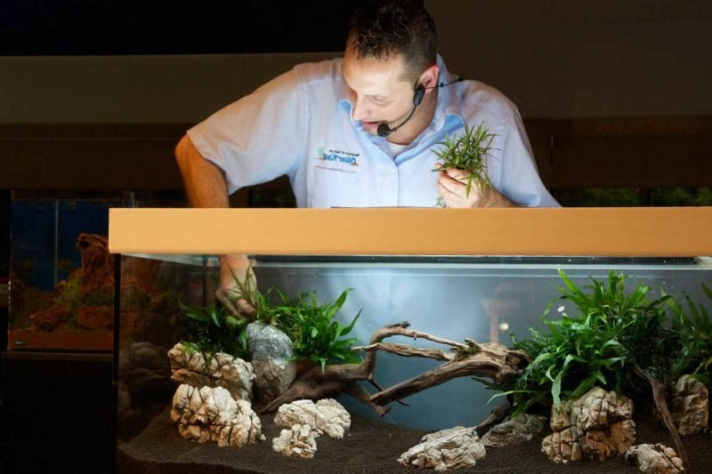 39 faszinierende aquarium einrichtungsbeispiele und tipps. Black Bedroom Furniture Sets. Home Design Ideas