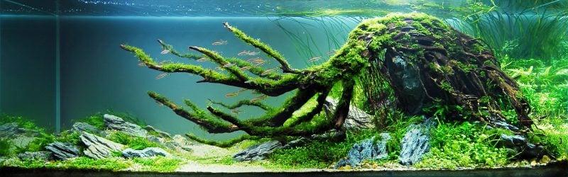 Gestaltung Aquarium Einrichtungsbeispiele