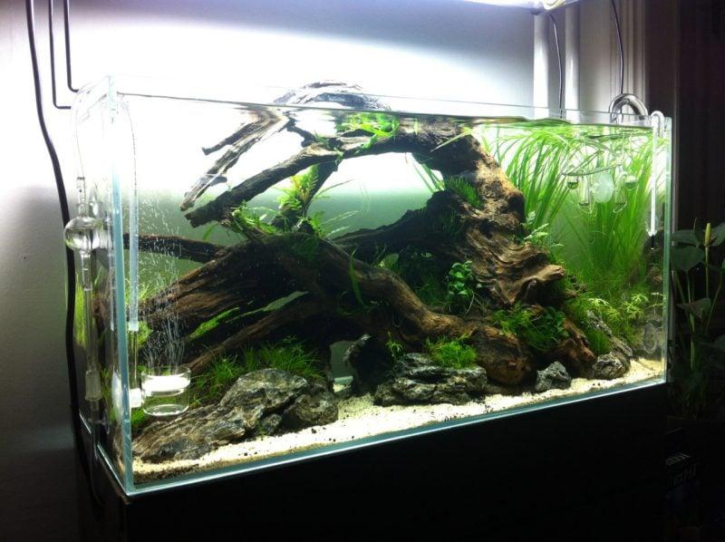 39 faszinierende aquarium einrichtungsbeispiele und tipps deko feiern zenideen - Holz deko aquarium ...