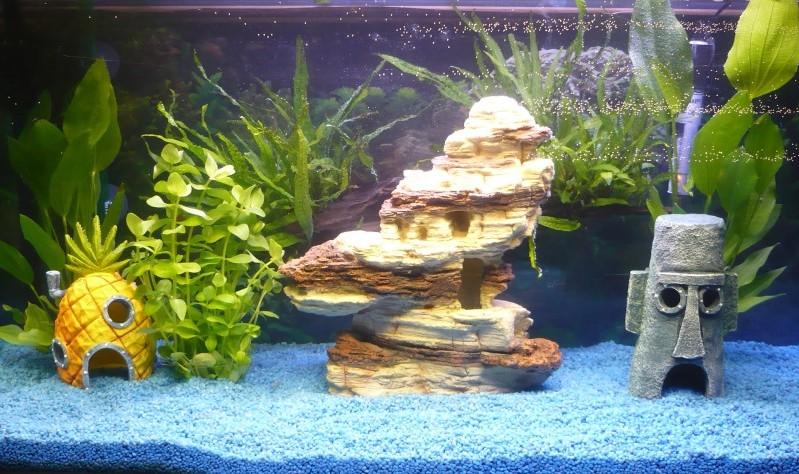 Aquarium Einrichtungsbeispiele Stein