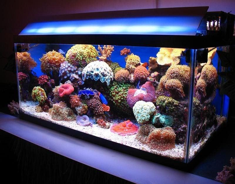 Aquarium Einrichtungsbeispiele Licht