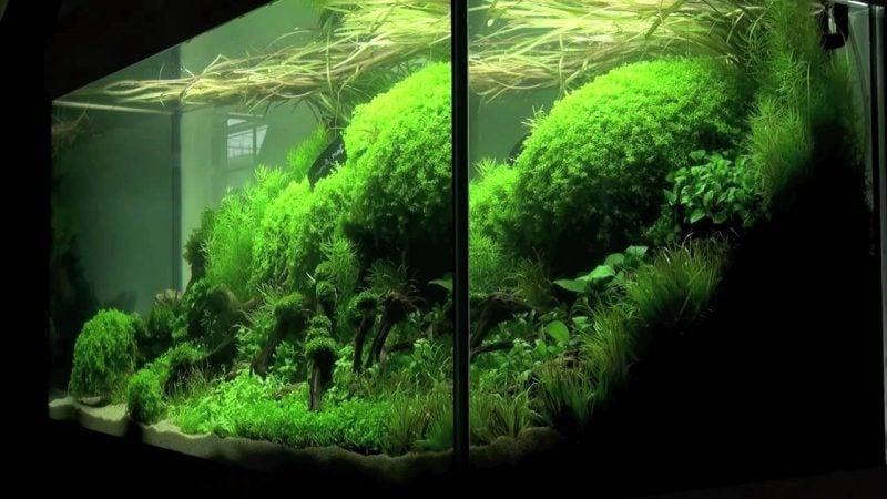 Aquarium Einrichtungsbeispiele Moos