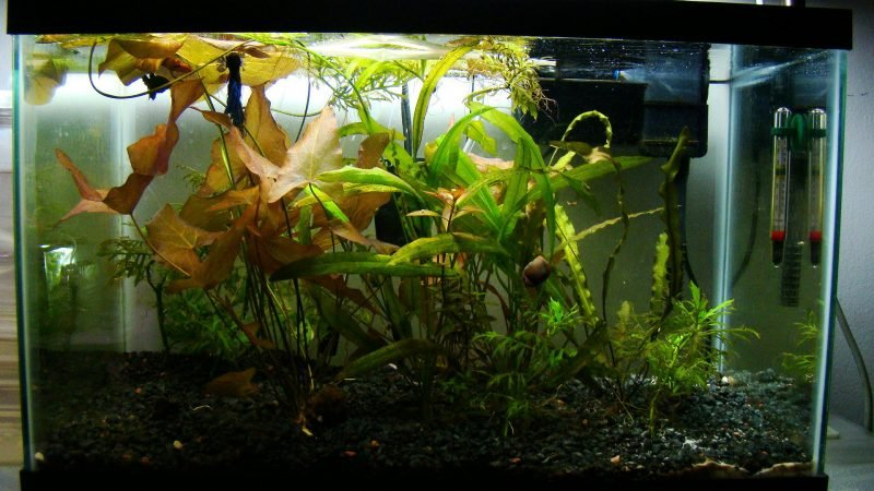 Aquarium Einrichtungsbeispiele Pflanzen