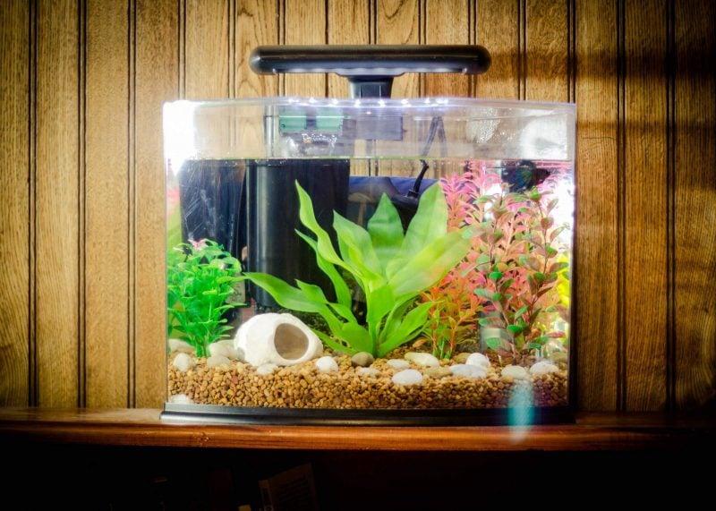 Aquarium Einrichtungsbeispiele Pflanze