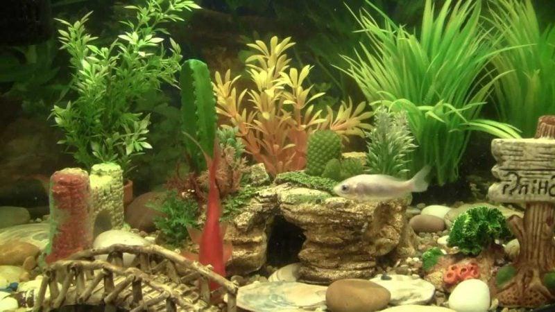 Aquarium Einrichtungsbeispiele Design mit Pflanzen
