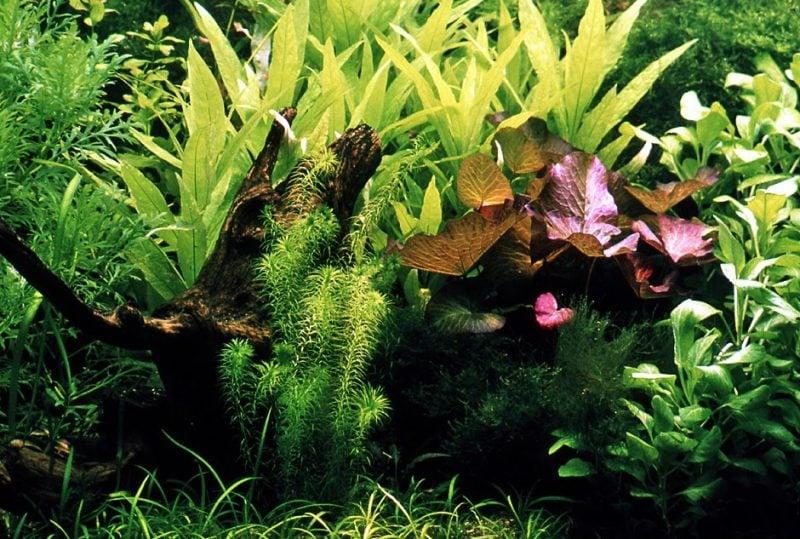 Aquarium Einrichtungsbeispiele Pflanzen Arten