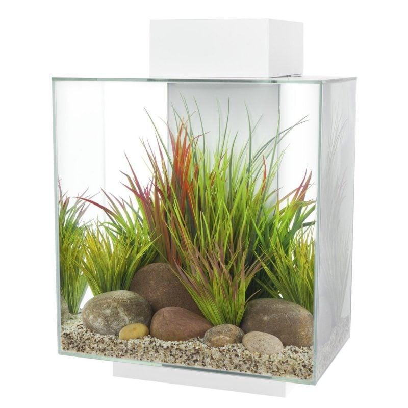 Aquarium Einrichtungsbeispiele Gras und Steine