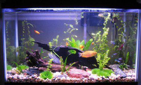 Tipps und Aquarium Einrichtungsbeispiele