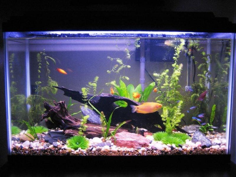 Aquarium Einrichtungsbeispiele Tropika