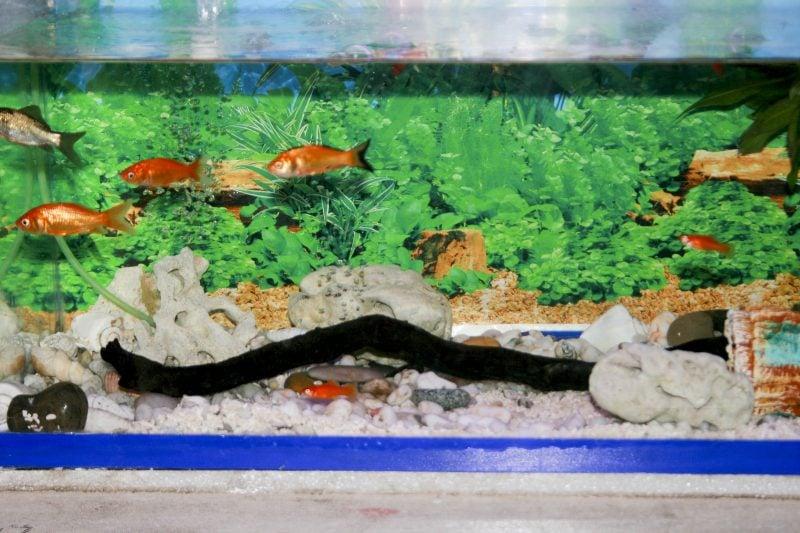 Aquarium Einrichtungsbeispiele Idee