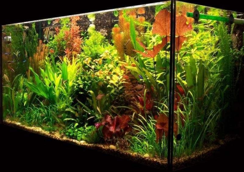 Aquarium Einrichtungsbeispiele mehr gepflanzt