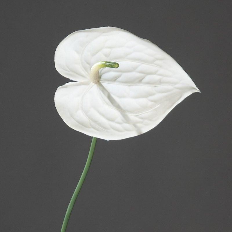 blumenarten anthurie pflanzenlexikon
