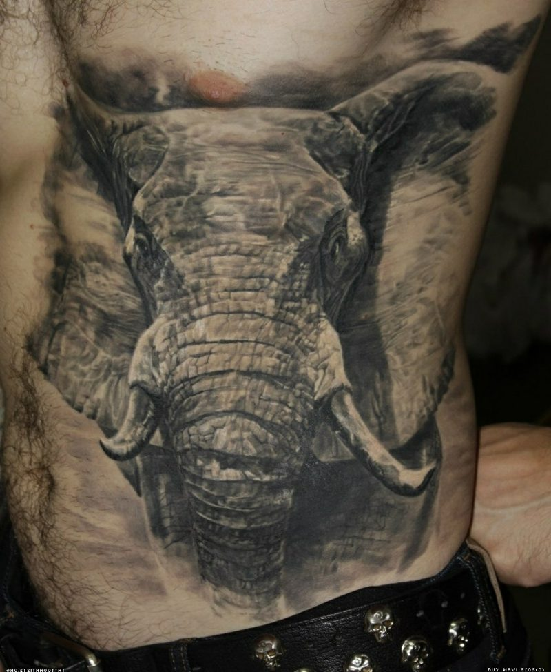 Elephant lesbian list