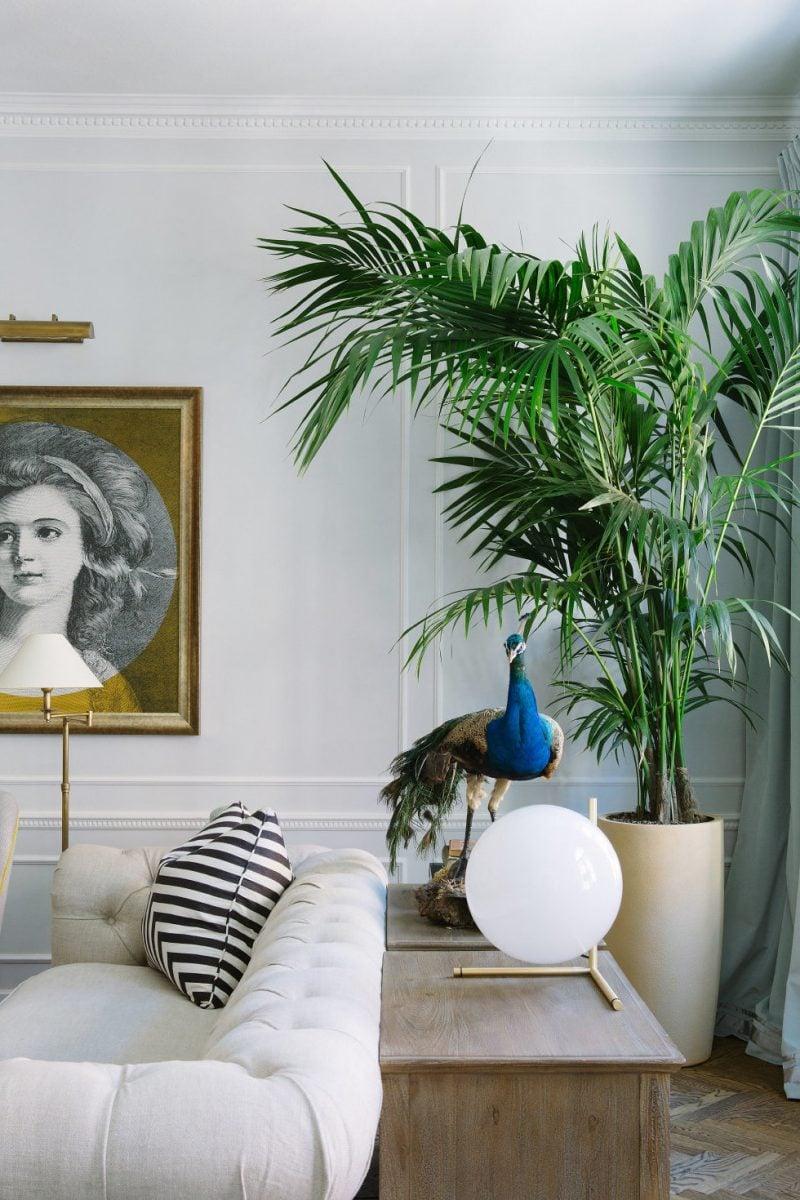 n tzliche pflegehinweise f r goldfruchtpalme deko. Black Bedroom Furniture Sets. Home Design Ideas