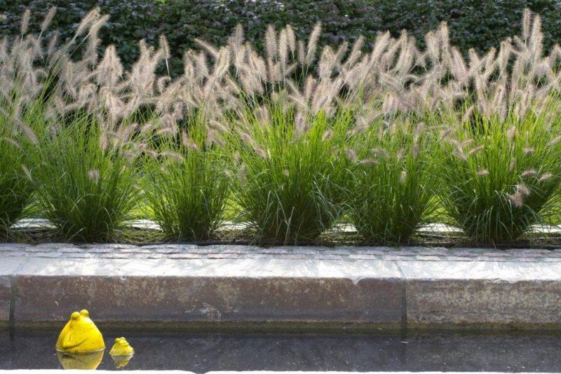 graser pflanzen frisch