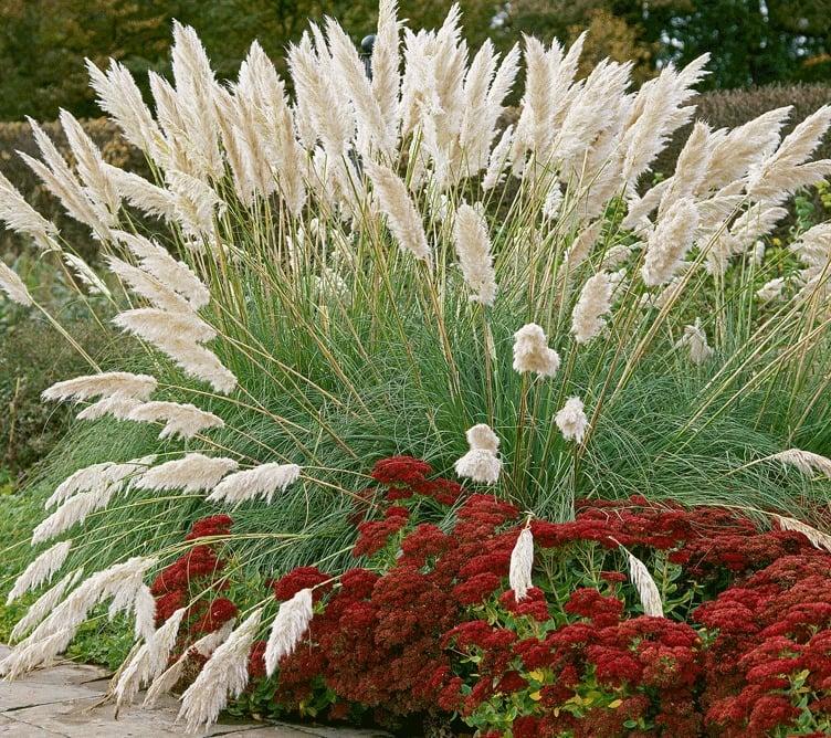 graser pflanzen weiß