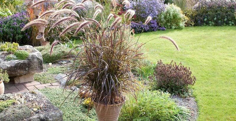 graser pflanzen angenehm